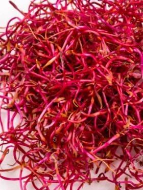 Burak czerwony nasiona na kiełki 1g