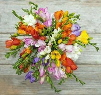 Cebulki kwiatowe z dostawą do domu Sklep internetowy