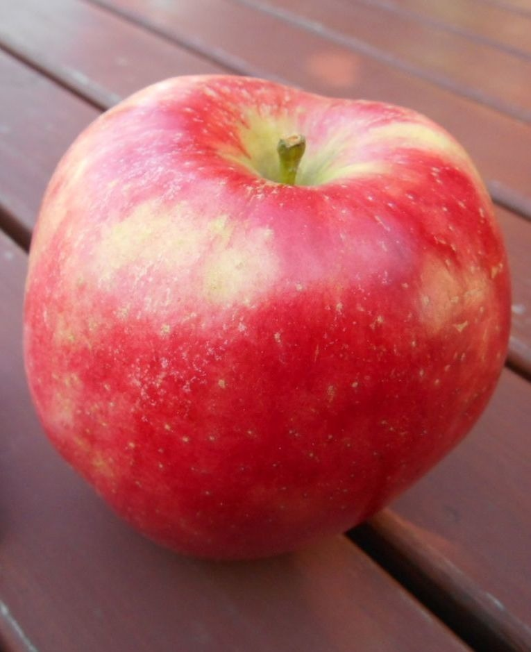 jabłko arszam