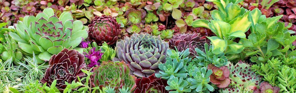 Stanowisko ciepłe i suche - byliny wieloletnie