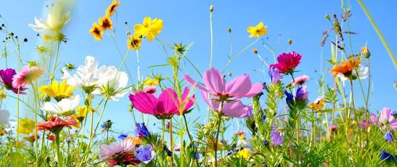 Nasiona kwiatów jednorocznych i wieloletnich