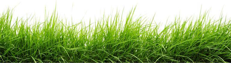 Nasiona traw na trawnik