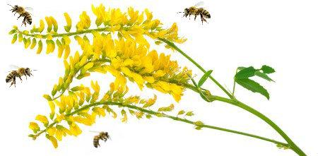 Nostrzyk - nasiona roślin miododajnych
