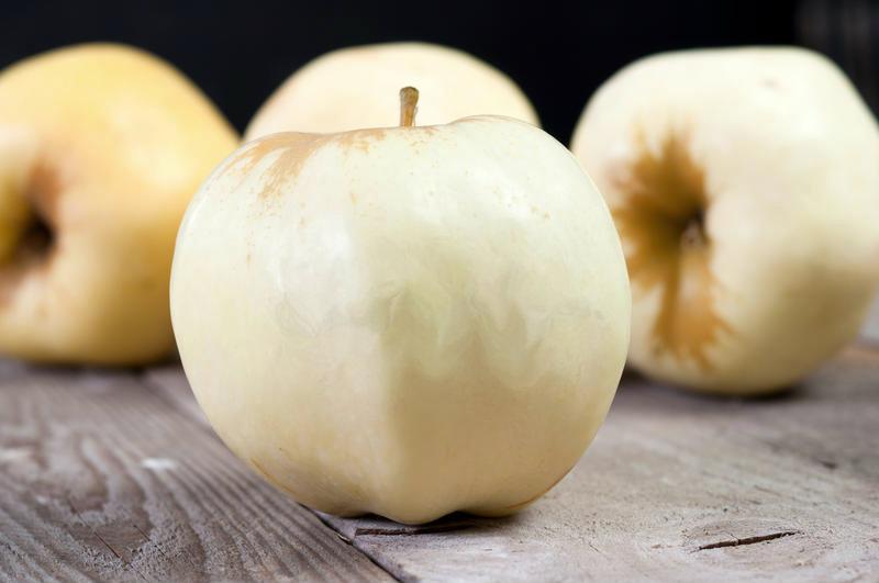 Jabłoń Antonówka biała Śmietankowa Sześćsetgramowa