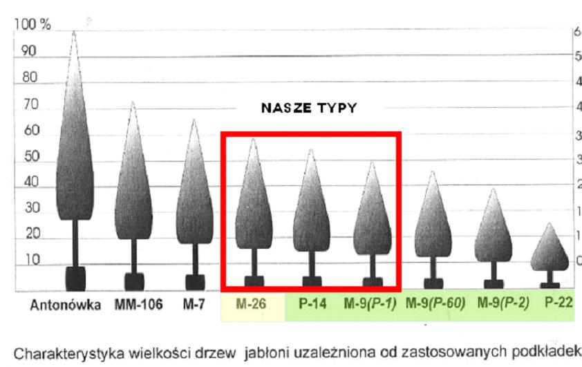 Charakterystyka wielkości drzew
