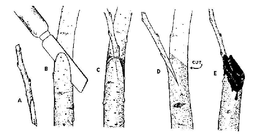 Przycinanie drzewka