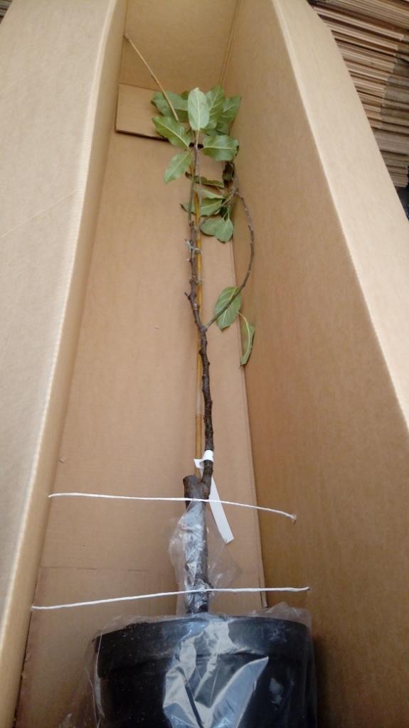 drzewko podczas pakowania do kartonu