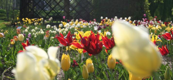 Pory roku - kwiecień w ogrodzie