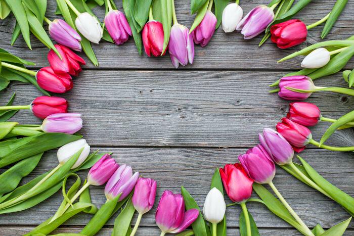 Tulipany - różnorodność odmian