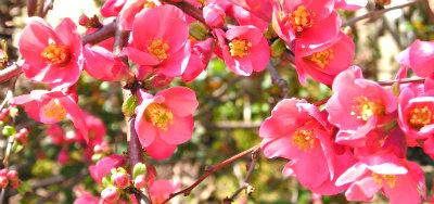 Wiosna w ogrodzie - maj